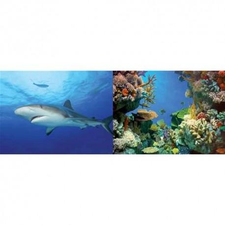 TETRA - Poster AquaArt 60x45 Coral & Shark