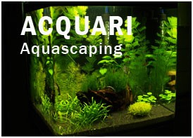 Acquari Aquascaping